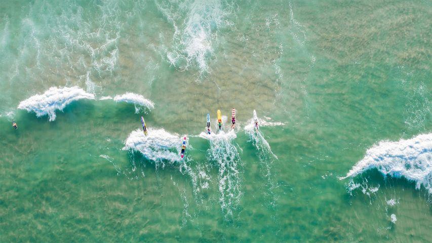 「バーレーヘッズのサーファーたち」オーストラリア, ゴールドコースト