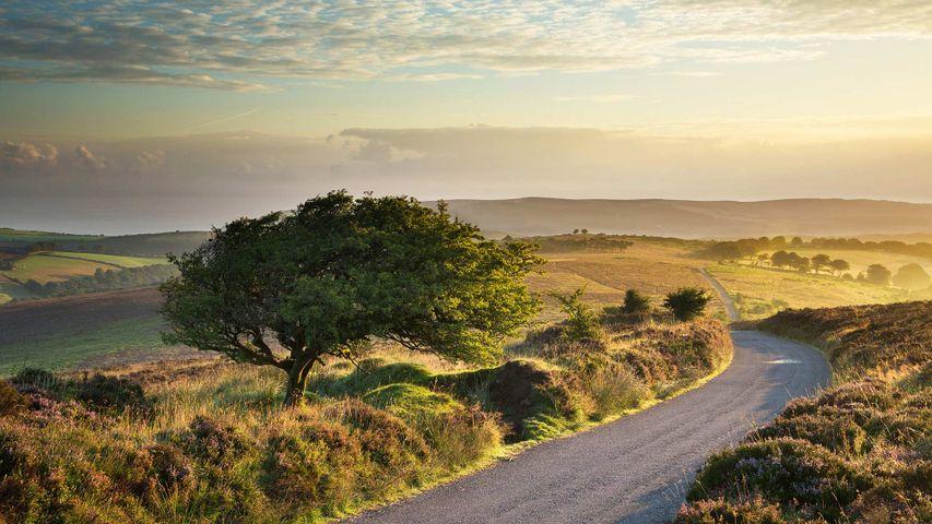 「エクスムーア国立公園」イギリス