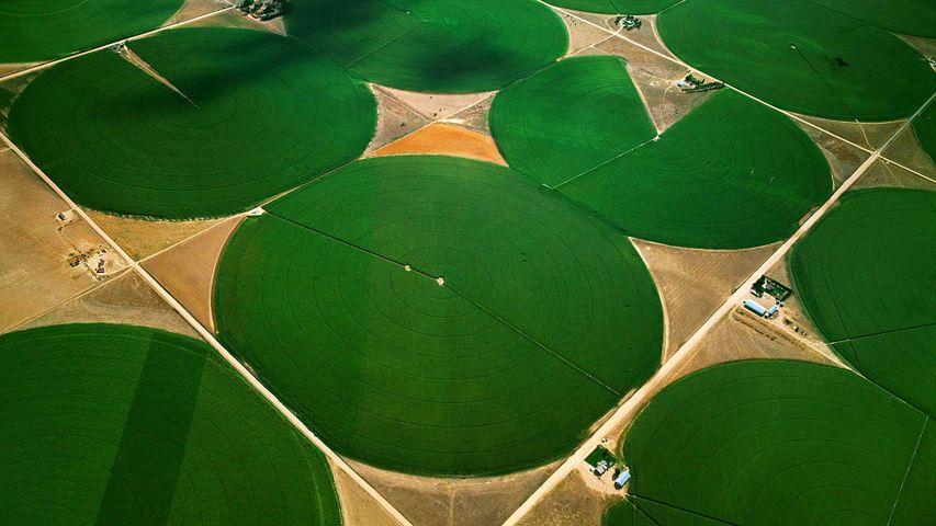 「センターピボット」米国コロラド州, モーガン郡