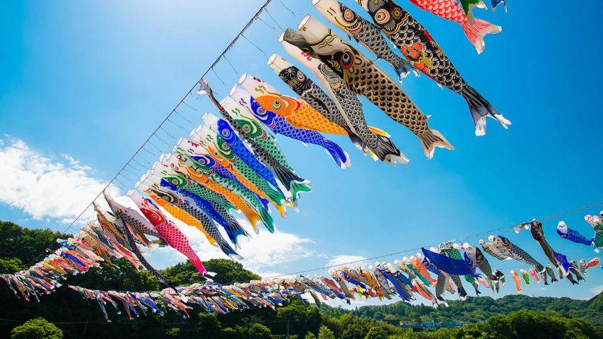 「泳げ鯉のぼり相模川」神奈川, 相模原市