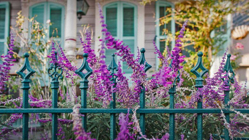 「ニューオーリンズ民家のフェンスと花壇」米国, ルイジアナ州
