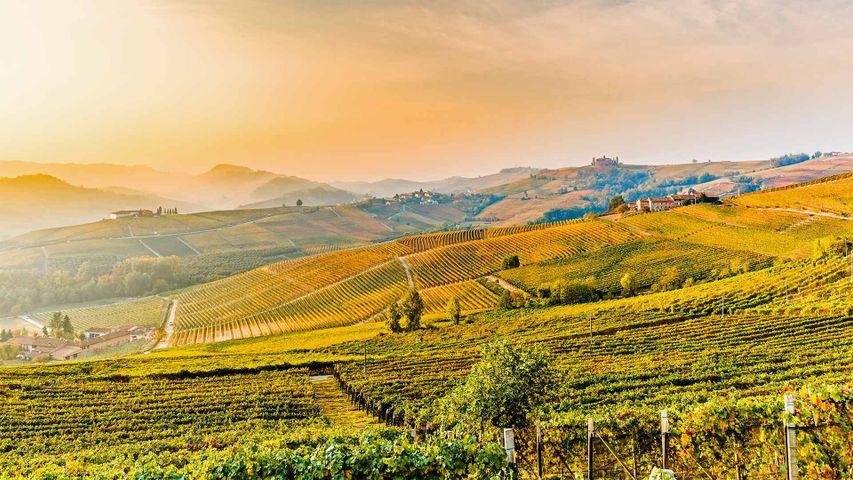 「バローロのワインヤード」イタリア, ピエモンテ州