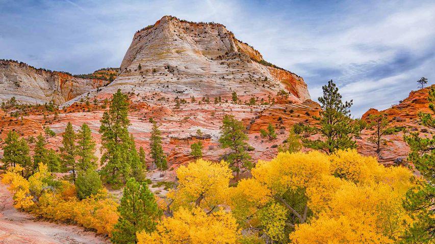 「ザイオン国立公園の紅葉」米国ユタ州