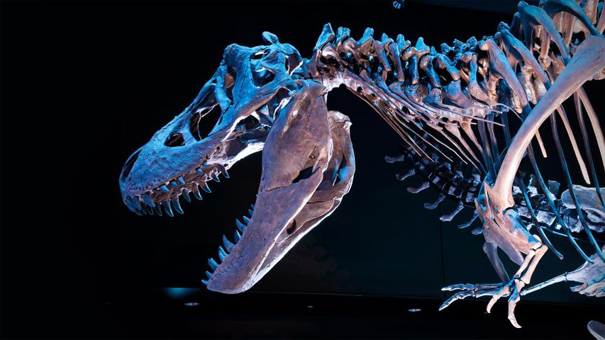 「ティラノサウルスの化石」